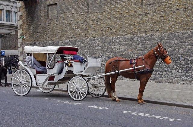 A white horsedrawn carriage Bellevue  P L Chadwick