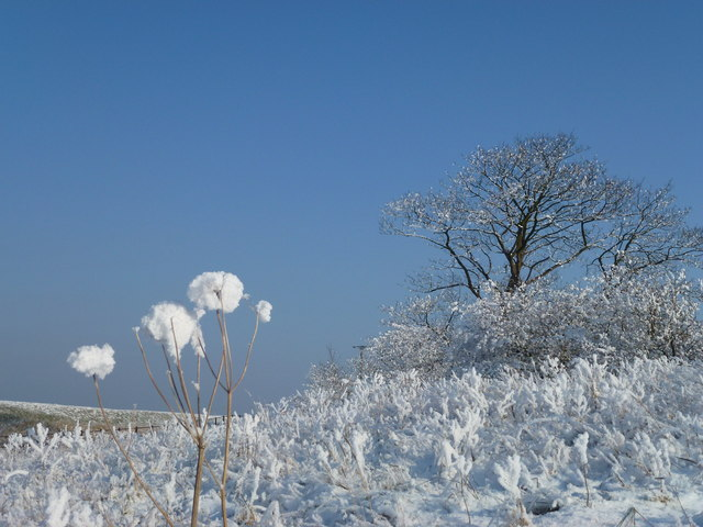 The Wash coast in winter  Hoar frost on  Richard