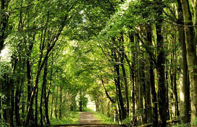 Path Somerset forest Coleraine 4  Albert Bridge ccby