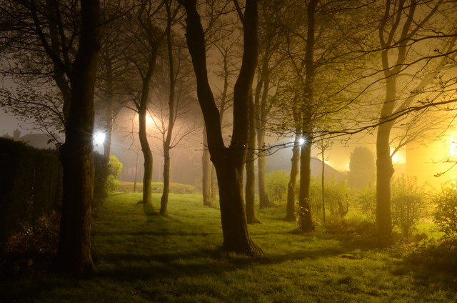 Suburban Trees at Night  Andrew Tryon ccbysa20