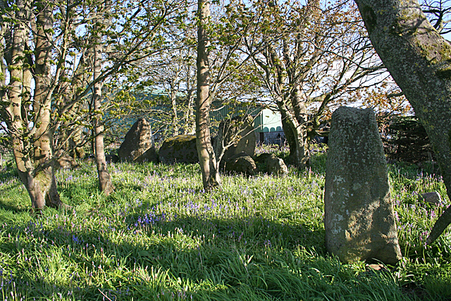 Image result for netherton stone circle