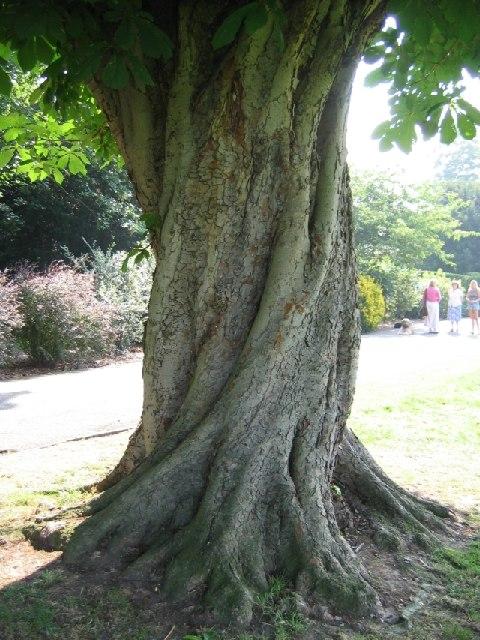 Google Fall Wallpaper Twisted Tree 169 Dave Eadie Cc By Sa 2 0 Geograph Britain