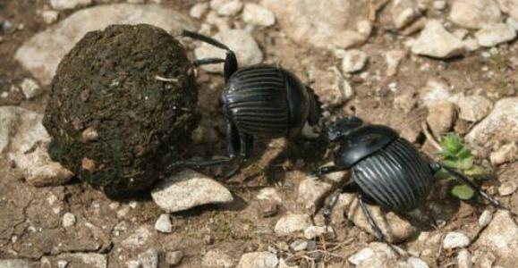 escarabajo-europa-press-.jpg