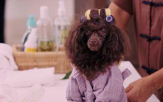 Globo exibe o filme Perdido pra Cachorro na Temperatura Máxima