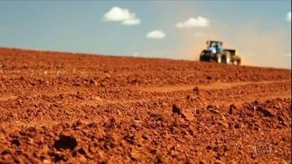 Produtores de trigo do DF apostam em alta do dólar para melhorar rendimentos