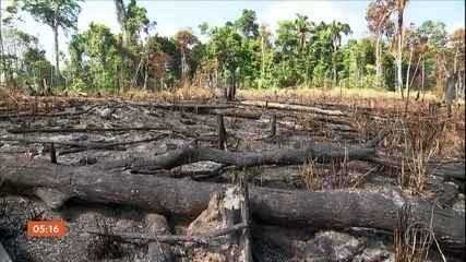 Bolsonaro edita decreto-lei que proíbe desmatamento e queimadas por 120 dias