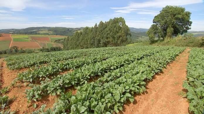 Produtores mudam estratégia de cultivo de hortaliças para lucrar no frio