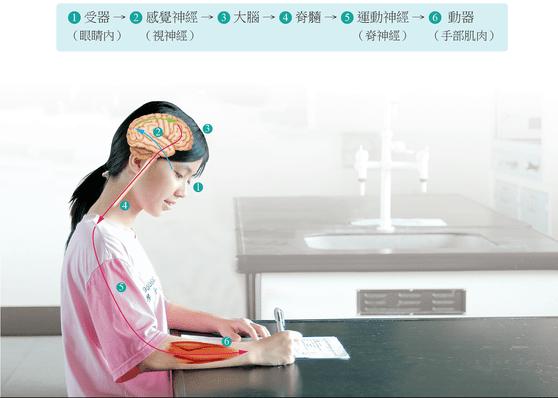 5-2神經系統 - Cindy's Bioworld