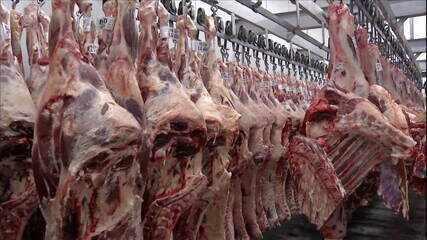 Exportação de frango para China aumenta 15% em janeiro