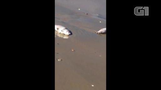 Resultado de imagem para peixes mortos no rn