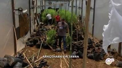 Polícia encontra pés de maconha em chácara de Araçoiaba da Serra