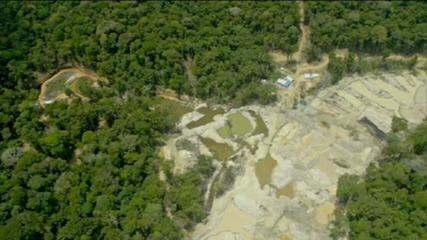 Desmatamento na Amazônia atinge o pior índice em 10 anos