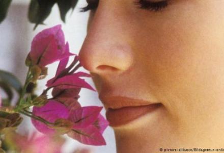 43547744_303_322383741 علوم : النبات لديه وسائل إدراك شبيهة بحواس الانسان المزيد