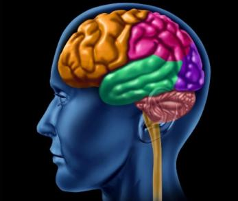 brain_346357107 دراسة: التعلم يغير بنية الدماغ Actualités