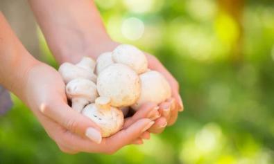 champignons_826757502 أغذية تساعد الانسان على الشعور بالسعادة المزيد