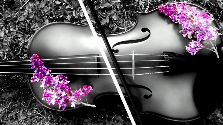 Cute Ukulele Wallpaper Violin 1080p Wallpaper High Definition High Quality