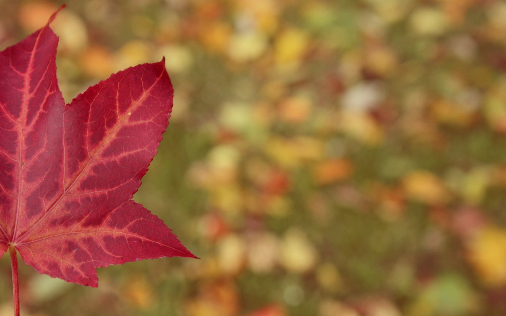 Cute Fall Computer Wallpaper Red Leaf Wallpaper High Definition High Quality