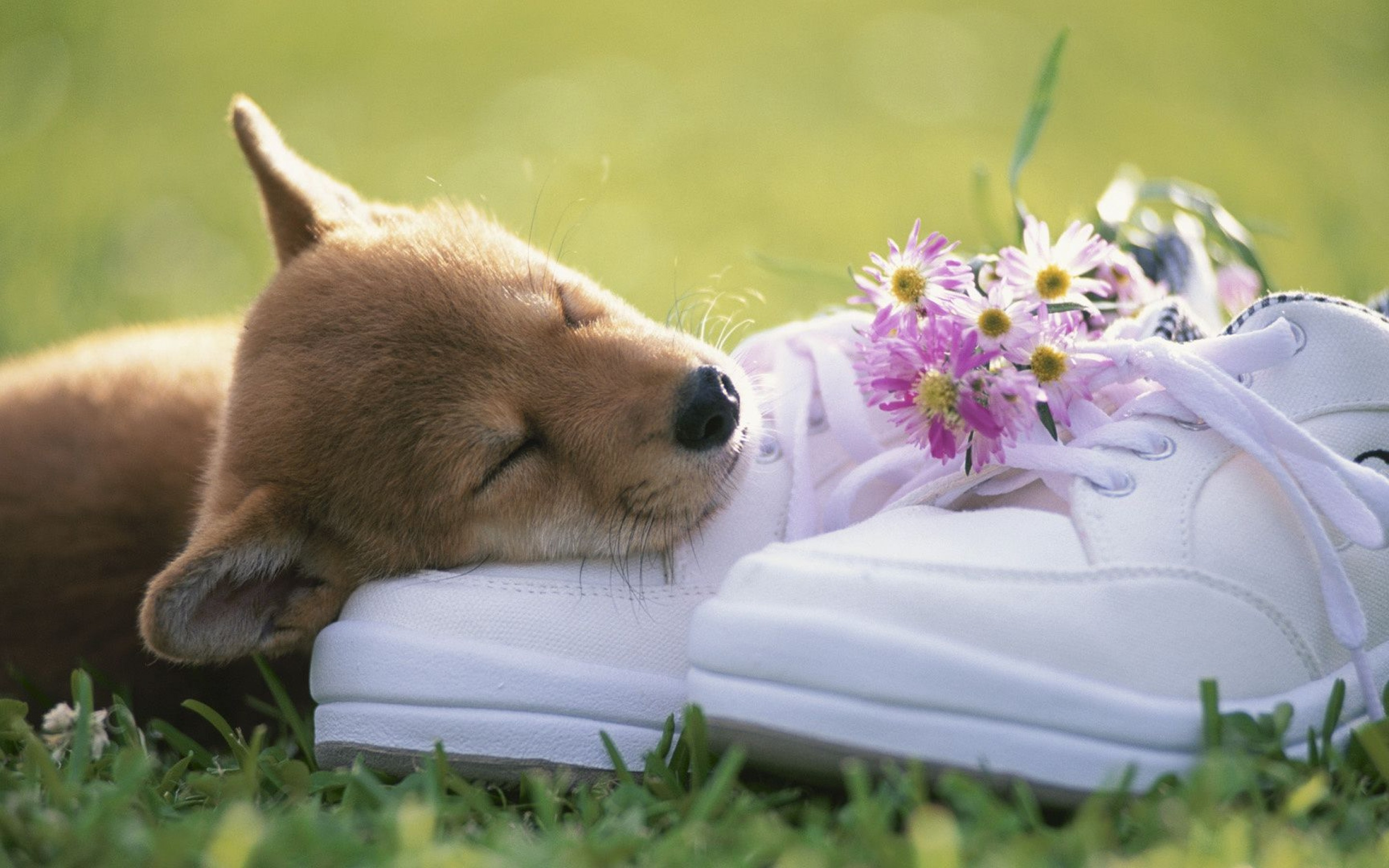 Puppies In Fall Wallpaper Puppy Sleeping Wallpaper High Definition High Quality