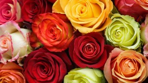 roses rose colorful wallpapers flowers mixed garden desktop flower god valentines romantic valentine widescreen meaning bouquet colored ye definition incredible