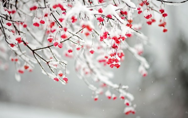 Winter Flowers - Wallpaper High Definition Quality Widescreen