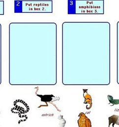 animal adaptations worksheets 2nd grade - video Dailymotion [ 1080 x 1920 Pixel ]