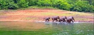 thekkady wildlife sanctuary periyar