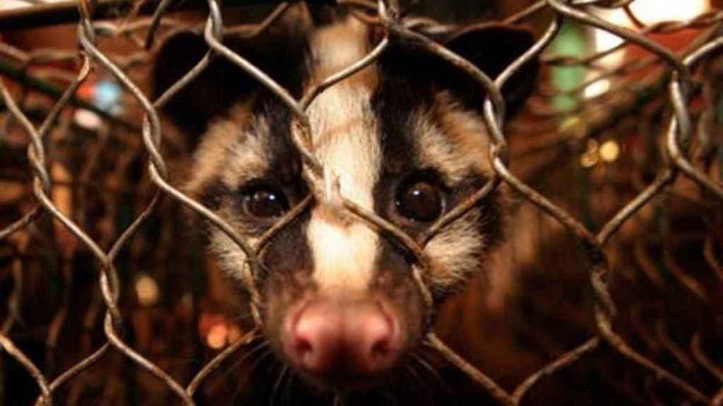 Por qué hay que acabar con la cría de animales salvajes: el turbio ...