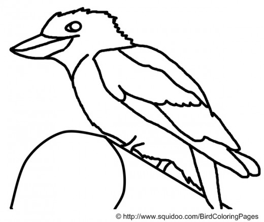 Kookaburra Coloring Page