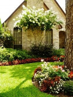 landscaping ideas crepe myrtle