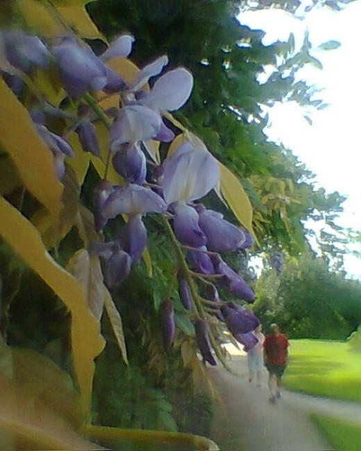 Blossom in September