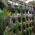 Recycling plastic bottles build your own hanging garden