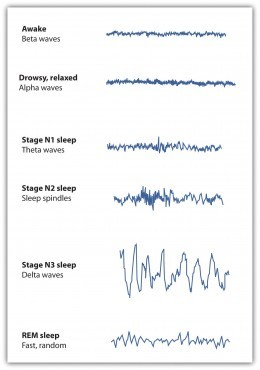 As sleep deepens neurons synchronize their impulses and produce high amplitude theta and delta waves