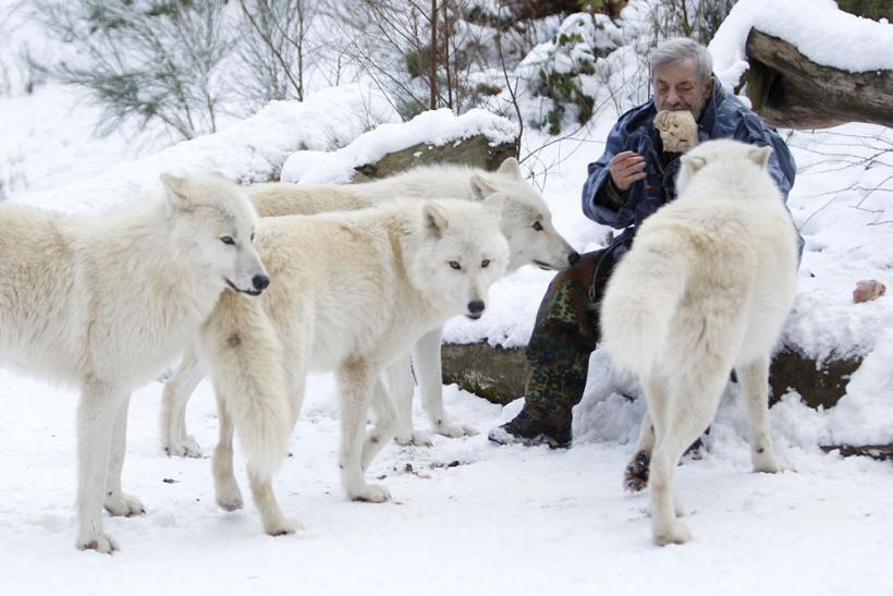 Freund And His Wolves
