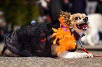 Halloween Costume Ideas For Pets 2015: How Dogs, Cats