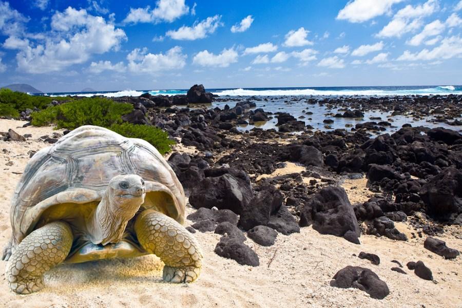 Destinasi wisata alam dunia: Kepulauan Galapagos