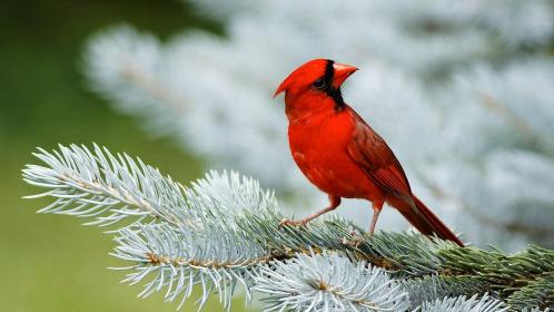 beautiful birds wallpaper 104544707 54 - Photo capturing tips, Become a pro photographer, Photo editing Softwares, Apps and more