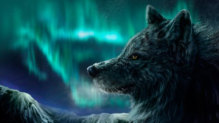 wolf wallpapers pic