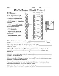 worksheet. Dna The Molecule Of Heredity Worksheet Key ...