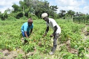 Rawle Clarke: A tremendous farmer