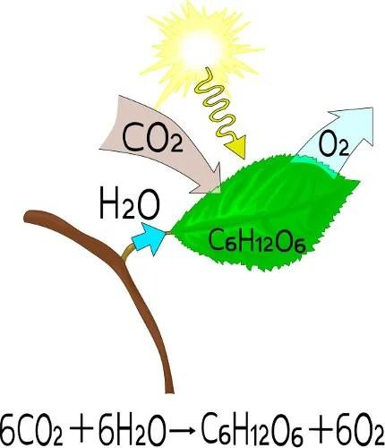 CO2 na fotossíntese