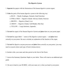 34 Label The Digestive System Quiz - Labels Database 2020 [ 1024 x 791 Pixel ]