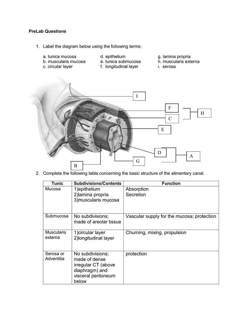 hight resolution of stomach label diagram of layer