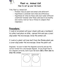 plant cell v animal cell venn diagram [ 791 x 1024 Pixel ]