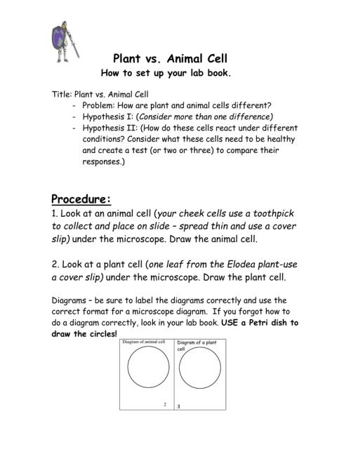 small resolution of plant cell v animal cell venn diagram