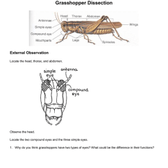 External Grasshopper Diagram Pioneer Car Stereo Wiring Free Dissection Observation