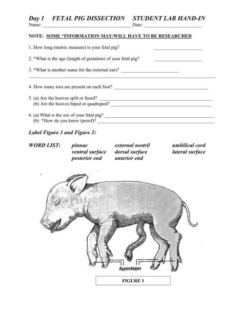 small resolution of pig diagram label