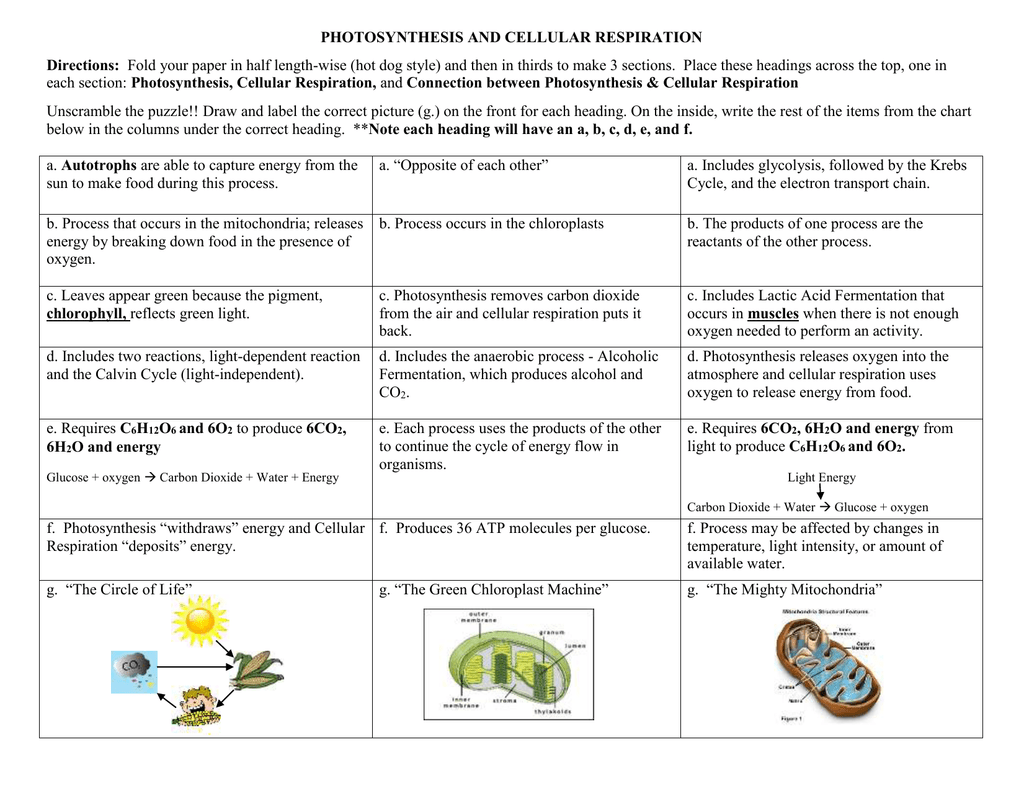 Fermentation In Photosynthesis The Cell Respiration