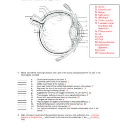 human eye diagram without label [ 791 x 1024 Pixel ]