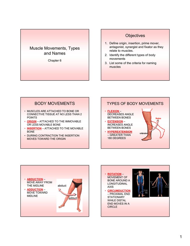 Synergist Definition Anatomy - Anatomy Drawing Diagram