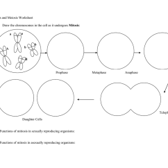 Mitosis And Meiosis Venn Diagram Worksheet 220 Volt 3 Phase Motor Wiring Grass Fedjp